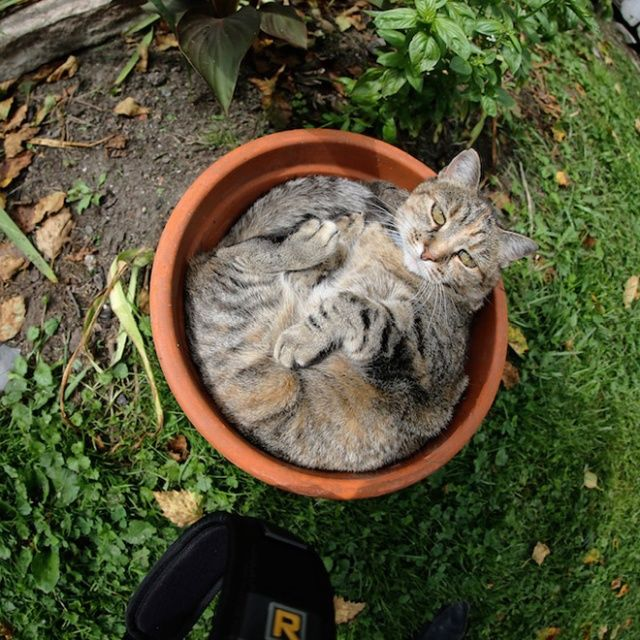 Cute Cats Sitting In The Plant Pots