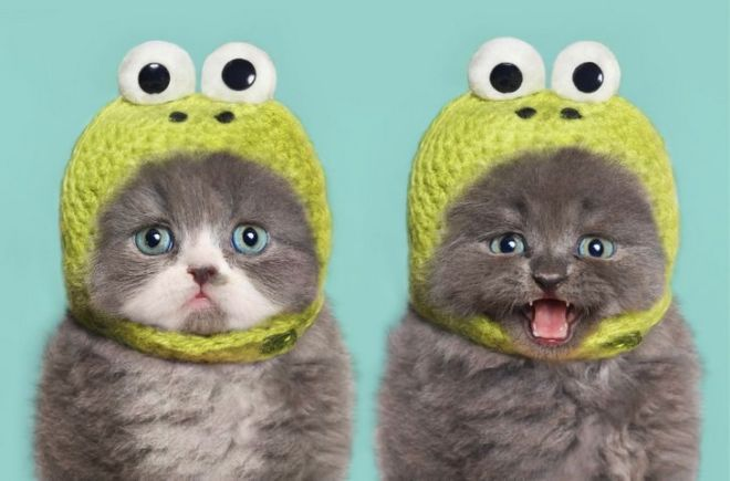 30 Dressed Up Adorable Kittens Are Here To Woo You
