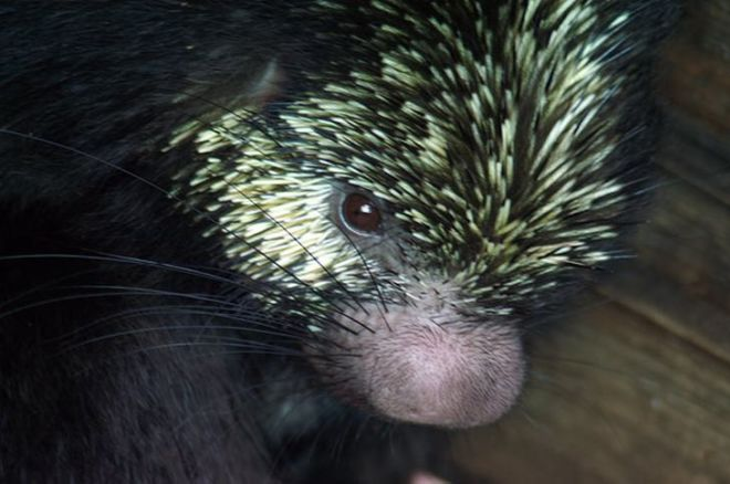 15 Weird Animals You Have Never Seen Before
