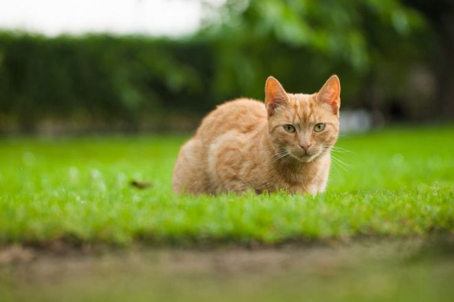 9 Effective Ways To Keep The Cats Away