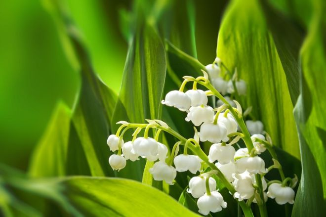 10 Killer Plants You Need To Stay Away From